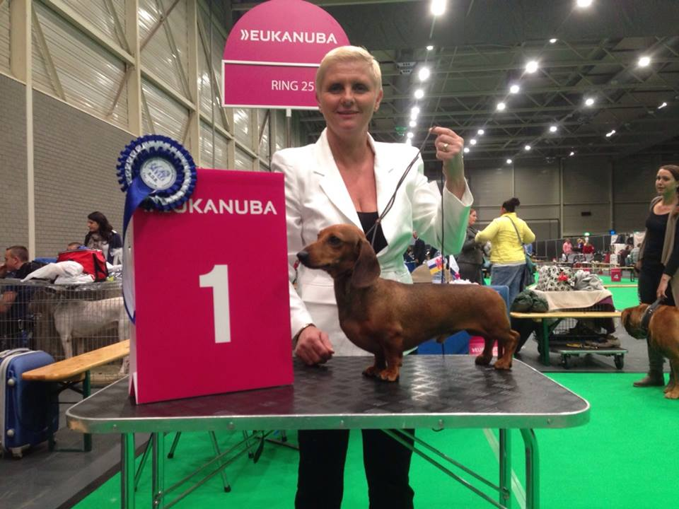 At the international dogshow in Maastricht our kaninchen smooth male
